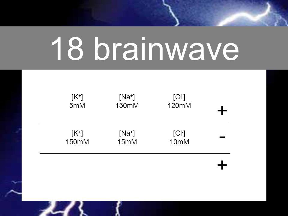 18 brainwave + - + [K+] 5mM [Na+] 150mM [Cl-] 120mM [K+] 150mM [Na+]